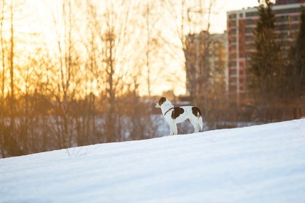 Retrato de um cão fofo de raça misturada correndo na neve no campo