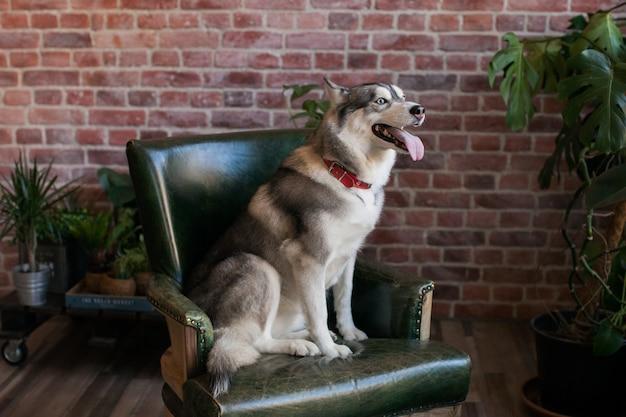 Retrato de um cão kidskin