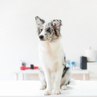 Retrato, de, um, cão, ligado, tabela, em, clínica
