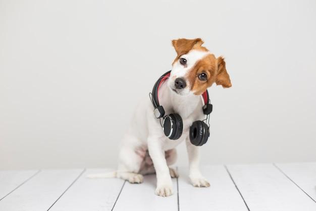 Retrato de um cão pequeno bonito sentado no chão branco e usando um fone de ouvido