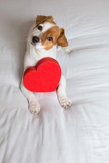Retrato de um cão pequeno jovem bonito sentado na cama com um coração vermelho. conceito dia dos namorados