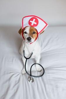 Retrato de um cão pequeno jovem bonito sentado na cama. usando estetoscópio e óculos. ele parece um médico ou um veterinário.