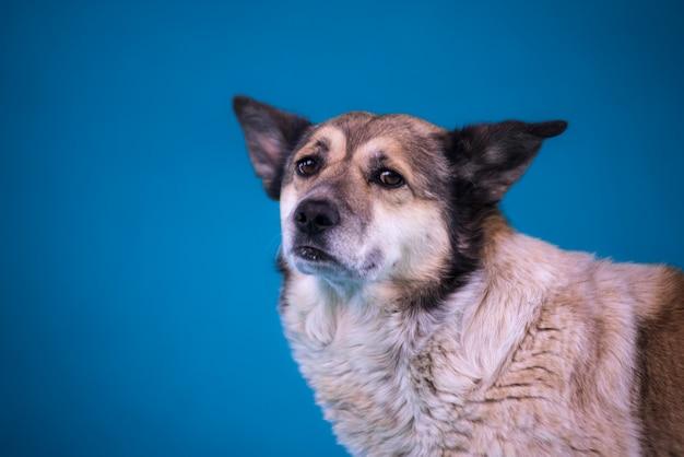 Retrato de um cão triste de um abrigo. fechar-se