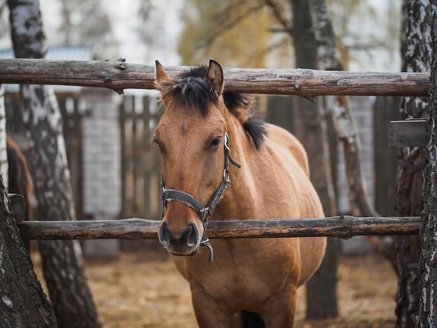 Retrato de um cavalo puro-sangue em um aviário ao ar livre.