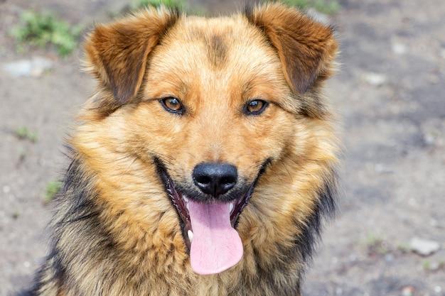 Retrato de um close-up de um cachorro fofo com a boca aberta em um cinza