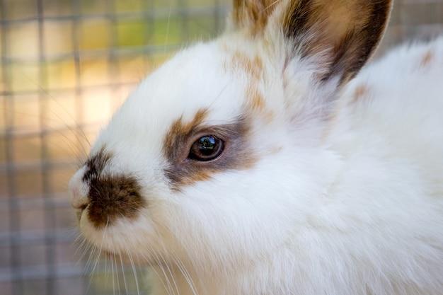 Retrato de um close-up de um coelho branco lanoso_