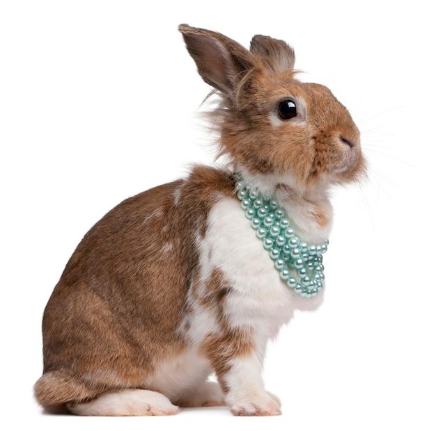 Retrato de um coelho europeu usando colares de pérolas