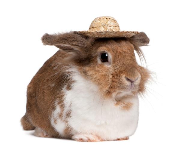 Retrato de um coelho europeu usando um chapéu de palha