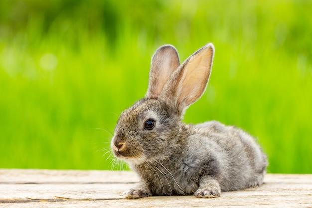Retrato de um coelho fofo fofo cinzento com orelhas em verde natural
