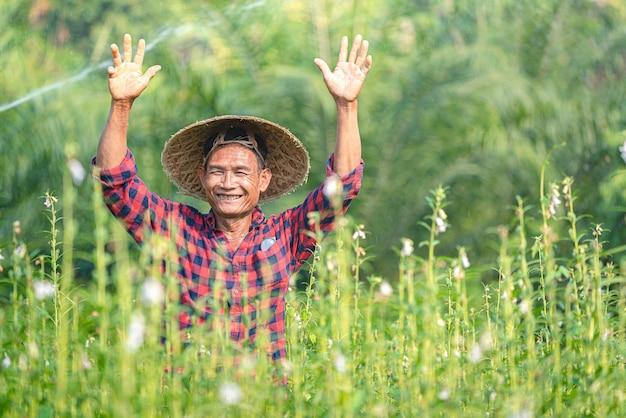 Retrato de um fazendeiro asiático sênior feliz no jardim do gergelim.