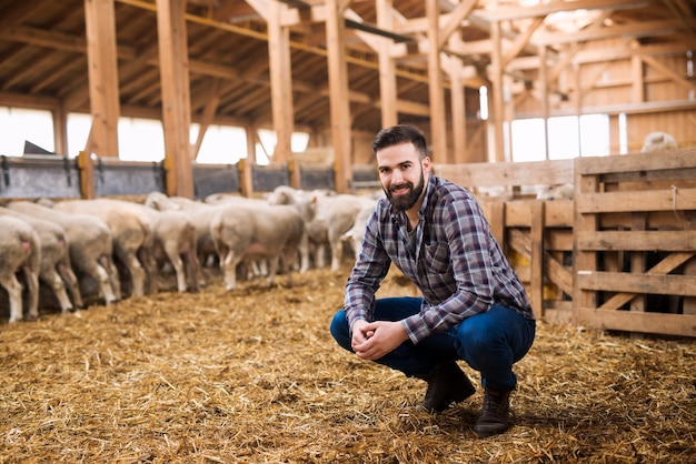 Retrato de um fazendeiro criador de gado bem-sucedido em um celeiro de ovelhas