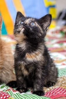 Retrato de um gatinho fofo