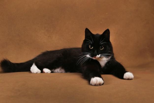 Retrato de um gatinho preto fofo deitado no chão