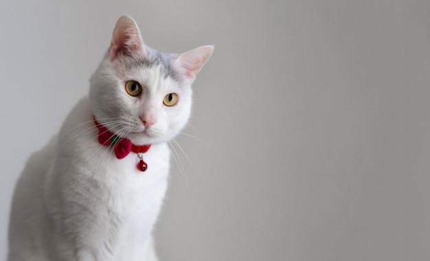 Retrato de um gato branco