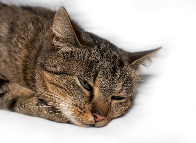 Retrato de um gato com os olhos cobertos. o conceito de doença e tratamento de gatos e gatinhos de estimação em casa ou na clínica veterinária.