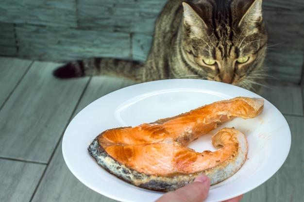Retrato de um gato com peixe frito. conceito de ração natural para animais de estimação
