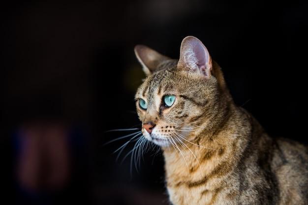 Retrato de um gato de bengala com incríveis olhos verdes