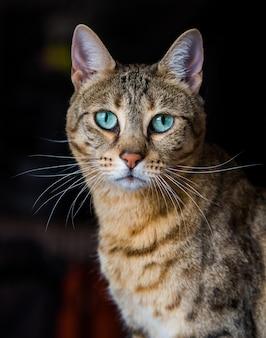 Retrato de um gato de bengala com olhos verdes incríveis de perto