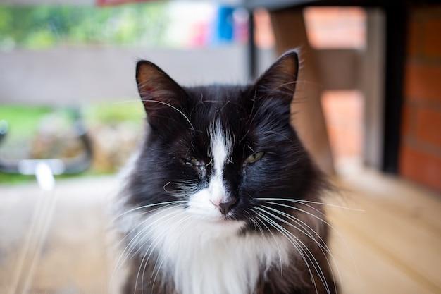 Retrato de um gato de rua com um olho inflamado e inflamado.