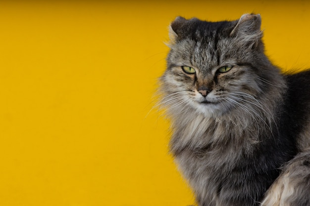 Retrato de um gato de rua.