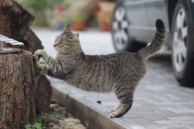 Retrato de um gato doméstico listrado posando em um dia ensolarado ao ar livre