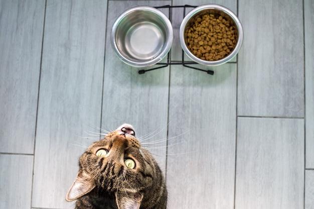 Retrato de um gato em um chão cinza com água e comida seca