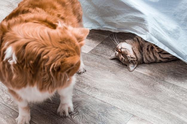 Retrato de um gato engraçado cinza engraçado e um cachorro vermelho close-up. gato e cachorro juntos