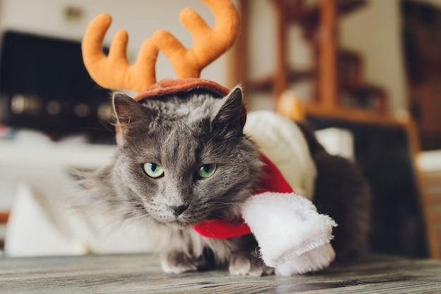 Retrato de um gato malhado fantasiado de papai noel