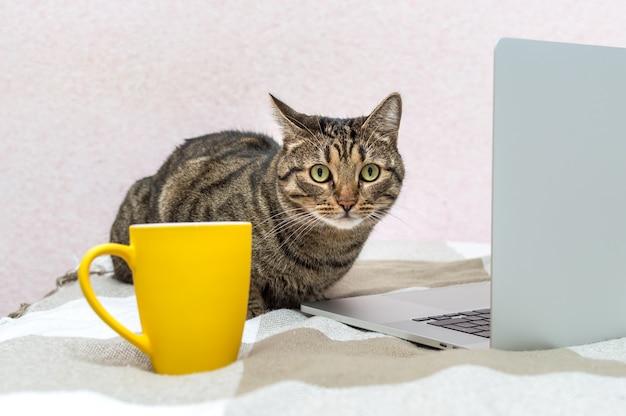 Retrato de um gato na cama ao lado de um laptop e um copo amarelo
