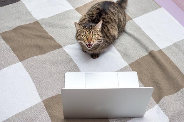 Retrato de um gato na cama ao lado de um laptop