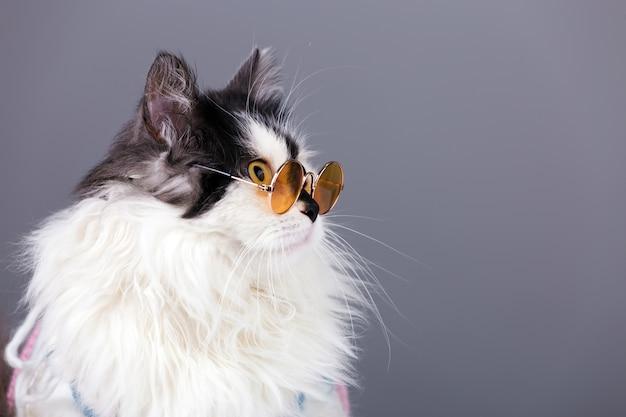 Retrato de um gato preto e branco com uma camisola de malha de inverno e óculos cinza