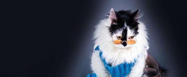 Retrato de um gato preto e triste com uma camisola de malha de inverno e óculos em fundo cinza, maquete panorâmica com espaço para texto