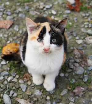 Retrato de um gato