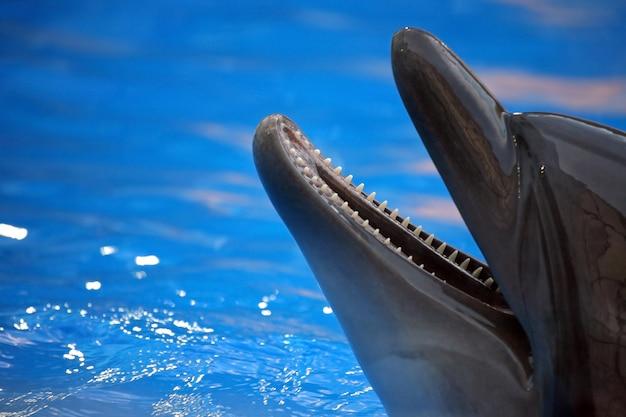 Retrato de um golfinho com a boca aberta