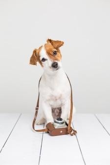 Retrato de um jovem cão pequeno bonito sentado no chão de madeira e usando uma câmera vintage marrom