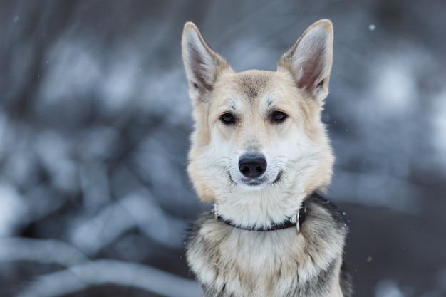 Retrato de um lindo cachorro em um prado