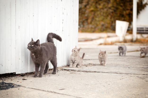 Retrato de um lindo gato cinza caminhando com gatinhos ao redor de um antigo farol branco perto do meu em um dia quente de outono