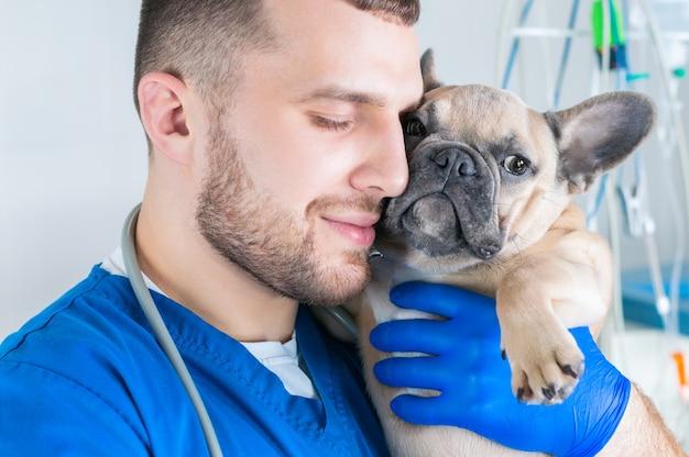 Retrato de um médico encantador com um buldogue francês. publicidade de clínicas veterinárias