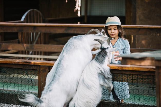 Retrato, de, um, menina, alimentação, dois, cabras, em, a, celeiro