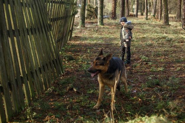 Retrato de um menino sorridente andando com cão grande raça pastor alemão na floresta.