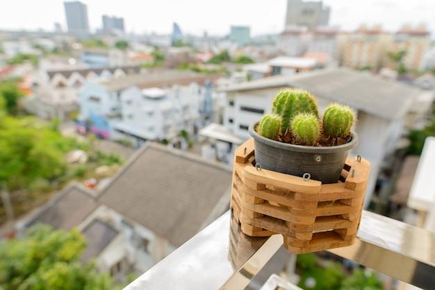 Retrato de um pequeno cacto em um pote de plástico preto com moldura de madeira contra a vista da cidade