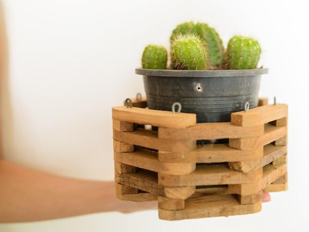 Retrato de um pequeno cacto em um pote de plástico preto com moldura de madeira