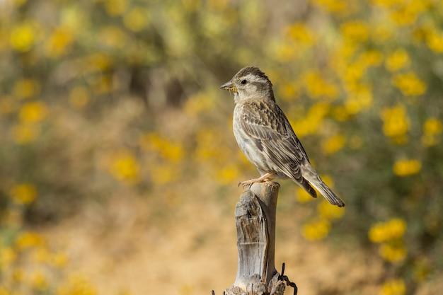 Retrato de um pequeno pardal sentado no galho de uma árvore