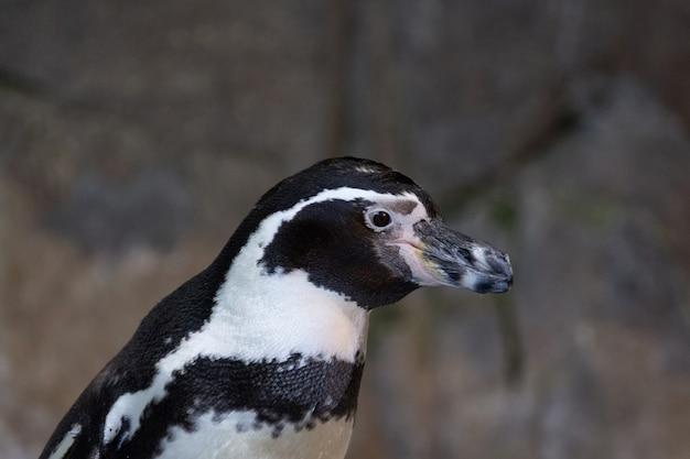 Retrato de um pinguim