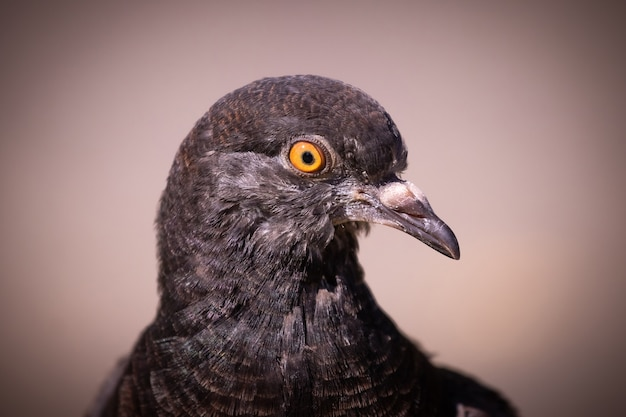 Retrato de um pombo de perto de perfil