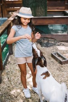 Retrato, de, um, sorrindo, cute, menina, alimentação, para, cabra, em, a, fazenda