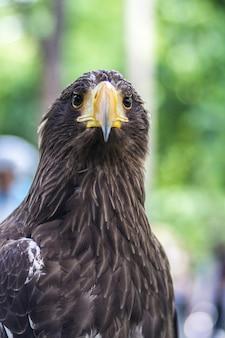 Retrato de uma águia