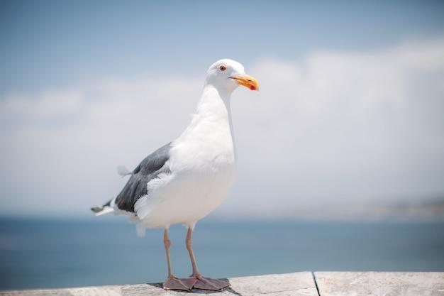 Retrato de uma bela gaivota adulta descansando no céu e no oceano.