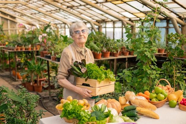 Retrato de uma mulher idosa contente com um avental em pé com uma caixa de legumes frescos enquanto a cultiva em estufa