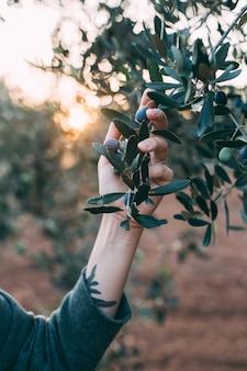 Retrato de uma senhora encantadora com roupa de resort de verão, posando ao lado de uma oliveira